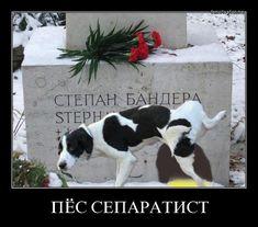 Украинская пропаганда продолжает верещать из-за популярности русских классиков