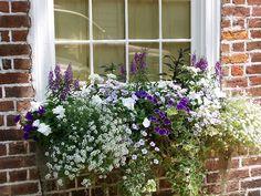 Wrought Iron Window Boxes, Alyssum Flowers, Window Box Plants, Flower Window, House Yard, Garden Windows, Container Flowers, White Gardens, Flower Boxes