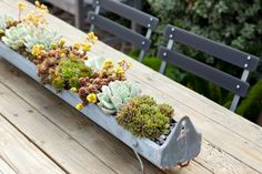 succulents planted chicken feed trough // mollywoodgardendesign.com