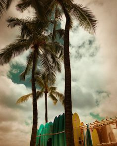 Surfing Art - Surfing Photography - Hawaii Photo - Palm Trees - Surfboards - Tropical Beaches - Summer - 8x10 Art Print - Surfing Waikiki on Etsy, $30.00