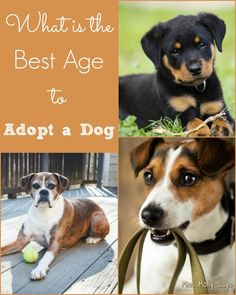 What is the Best Age to Adopt a Dog? This info will help you decide!