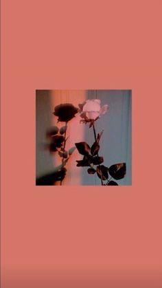 I gave you a rose you go gülüverip Iphone Wallpaper Images, Mood Wallpaper, Iphone Wallpaper Tumblr Aesthetic, Homescreen Wallpaper, Iphone Background Wallpaper, Aesthetic Pastel Wallpaper, Tumblr Wallpaper, Disney Wallpaper, Aesthetic Wallpapers