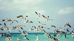 Birds On Sea Wallpaper
