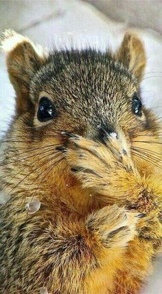 Squirrel / Sincap, he/she is laughing at us! Animals And Pets, Baby Animals, Funny Animals, Cute Animals, Wild Animals, Funny Cats, Cute Creatures, Beautiful Creatures, Animals Beautiful