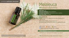 Melaleuca, or tea tree oil, is the essential oil distilled from Melaleuca alternifolia, a shrub that grows on the Australian coast. It is renowned for its cleansing and purifying effects, as well as its ability to protect against environmental and seasonal threats and promote healthy immune function.