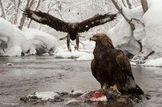 As mais belas fotografias da Natureza Selvagem
