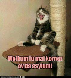 cute http://sulia.com/channel/cats/f/d18af70b-cfad-4997-9c1c-8907323fad66/?