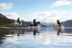 Horse riding in New Zealand | Things to see and do in New Zealand