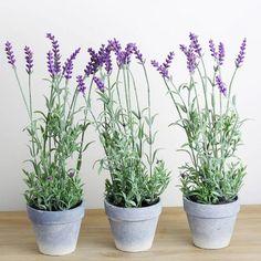 decoracao-receber-flores-lavanda-arranjos-studio-lab-decor (13)
