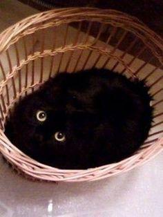 Black cat lying inside a wicker basket