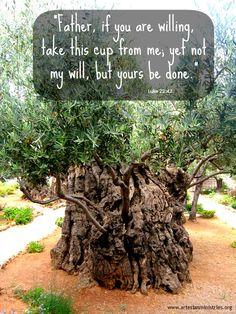 Garden Of Gethsemane; Luke 22:42