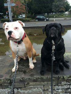 Hundebilder 🐶