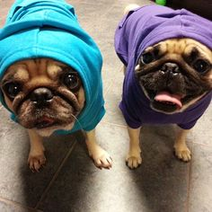 Something amazing happened this weekend! The girls got hoodies. Oh yes. (SR)