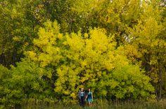 Engagement Photos. Preston Utley. Denver Wedding Photographer. Mountains. Colorado. Fall colors.