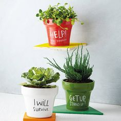 If your plants could sing...ONLY 'I WILL SURVIVE' NOW LEFTThis stunning handmade plant pot is sure to bring expression to even the most timid of plants. The perfect gift for any green fingered Gloria Gaynor fan, the 'I Will Survive', 'Help! I Need Somebody' or 'Get Up Stand Up' plant pot is sure to bring the encouragement and support that every young seedling needs on its journey to adulthood.  ONLY I WILL SURVIVE NOW LEFTCeramicH14 x D16 cm