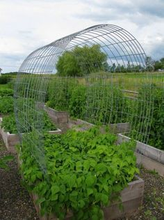"Beans are planted on the edge and climb up the ""trellis"" and salad greens are planted in the middle so they are exposed to the sun early spring and shielded from it in the hot summer months..Great idea."