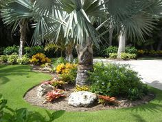 landscaping around a palm tree - Google Search