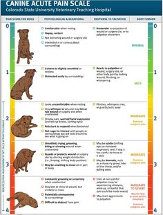 This is the pain scale used by vets to determine degree of pain. Dogs are very good at hiding how much pain they are in as a self preservation.