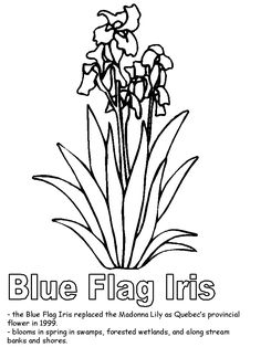 Blue Flag Iris coloring page Iris Flowers, Blue Flowers, Fun Facts About Canada, Diy Projects That Sell Well, Journal Writing Prompts, Blue Flag, Flower Quilts, Little Flowers, Embroidery Patches