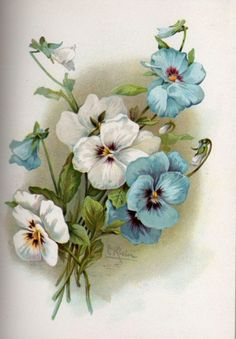 Pansies - Retro picture for embroidery and decoupage. Discussion on LiveInternet - Russian Service Online Diaries