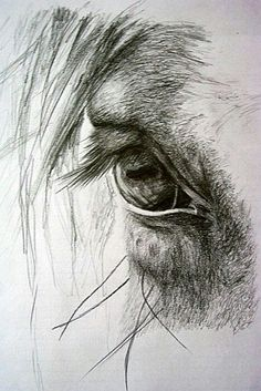 It's in their eyes…some of my favorite photos are the ones I take of a horses eye! Es ist in ihren Augen … einige meiner Lieblingsfotos sind die, die ich von einem Pferdeauge nehme! Pencil Drawings Of Animals, Horse Drawings, Animal Sketches, Drawing Sketches, Art Drawings, Drawing Ideas, Sketching, Sketches Of Horses, Drawing Animals