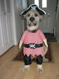 Super funny dog costumes