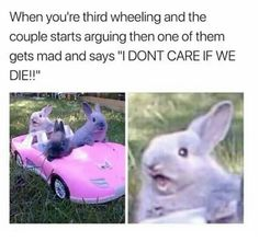 Our favorite memes starring bunnies! Explore the most funniest bunny memes pictures that are so underrated. These bunny memes are so sweet and cute. Animal Memes, Funny Animals, Animal Fails, Funny Cute, Hilarious, Dankest Memes, Funny Memes, 9gag Funny, Funny Videos