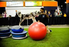 The Martial Arfs taking core conditioning to the next level! - fitpawsusa.com