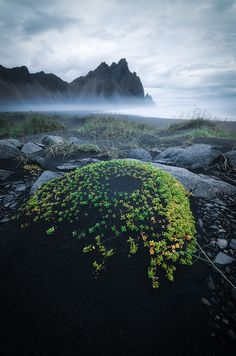 The beautiful vegetation of Stokksnes on a stormy evening with majestic Vestrahorn looming in the background [OC] [9001360] #reddit