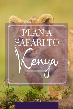 Dreaming of seeing the Great Migration? Elephants and lions in the wild? Here's what you need to know about planning a safari to Kenya! Plan A, How To Plan, The Great Migration, Wild Lion, Kenya Travel, Air Balloon Rides, Tourist Places, Long Haul, African Safari