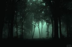 Fotos aus der geheimnisvollen Wald Holz