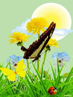 Gif fleurs papillon