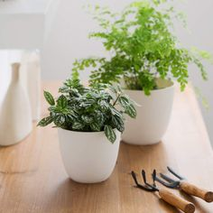 You've mastered keeping your house plants alive - now what? Display your much-loved indoor plants like the proud plant parent you are! Indoor Trees, Indoor Flowers, Indoor Plants, Indoor Gardening, Amazing Gardens, Beautiful Gardens, Diy Home, Home Decor, Plastic Planters