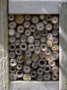 Awesome Insektenhotel f r Wildbienen aus Pflanzenst ngeln Mauerbiene