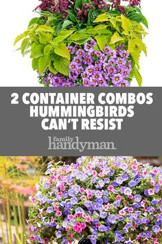 With blooming beauties like petunias, salvias and calibrachoas, your backyard becomes a popular hummingbird hot spot in no time. Get growing in a snap with these easy planting plans from Proven Winners. Hummingbird Flowers, Hummingbird Garden, Planting Plan, Planting Bulbs, Container Flowers, Container Plants, Smelling Flowers, Garden Catalogs, Gardening Zones