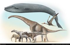 """""""Giants"""" byJosé Antonio Peñas:  """"A selection of bigger beasts of all times. I compose 3d images with classic 2d drawing. You can see in ground, right to left, african elephant (currently, the bigger land beast) indricotherium (the bigger mammal of all times), TRex (one of biggest predators), Brachiosaurus (one of biggest dinosaurs) and human (the bigger stupid in earth). In top, blue whale (the bigger beast of all times) and quetzalcoatlus (the bigger flying)"""""""