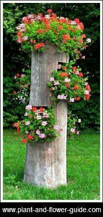Instead of completely cutting down a sick or dead tree, leave 6 or 7 feet standing & turn it into a hanger for plants. This one is displaying Ivy Geraniums. Lawn And Garden, Garden Art, Garden Design, Beautiful Gardens, Beautiful Flowers, Ivy Geraniums, Tree Stump Planter, Log Planter, Vertical Planter