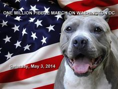 let's all join the pitbull march!!