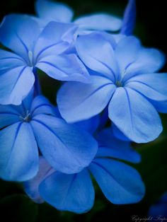 More blue flowers