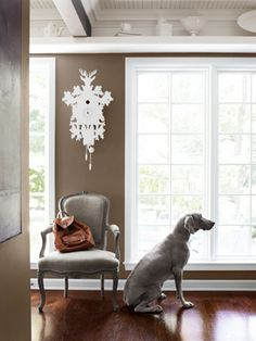 Welcoming Sunlight Fay the Weimaraner strikes a pose next to a linen-upholstered antique armchair. Susan Jones bought the cuckoo clock at The Conran Shop. Weimaraner, My Living Room, Living Room Decor, Brown Home Decor, Brown Color Schemes, Brown Walls, Brown Couch, Up House, Cool Rooms