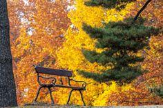 Esce oggi, 16 settembre, in libreria il volume  Le foglie d'autunno  (Electa) curato dall'architetto Paolo Pejrone, affiancato in questo lavoro dal fotografo Dario Fusaro.  All?inizio dell?autunno, con caparbia robustezza, funghi, foglie e fermenti diventano le esplicite comparse di un mondo vivace, curioso in continuo divenire , racconta Pejrone, che ha voluto raccogliere alcune delle tantissime sfumature di questa stagione. Uno spettacolo straordinario che la natura ci offre, preparandoci ...