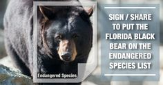 FWC is planning to hold another bear hunt in Florida despite not knowing the bear population and 75% of Floridians who oppose the hunt. The only way we can stop this from happening is getting the Florida Black Bear back on the Endangered Species list. Sign the petition and let's protect this iconic species from the brink of extinction.