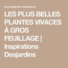 LES PLUS BELLES PLANTES VIVACES À GROS FEUILLAGE | Inspirations Desjardins