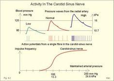 carotid sinus nerve