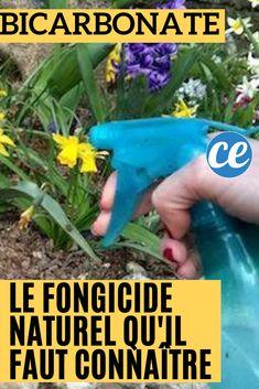 Le Bicarbonate : Le Fongicide Naturel Que Tous Les Jardiniers Devraient Connaître. Bush Beans, Permaculture, Horticulture, Amazing Gardens, Garden Plants, Home And Garden, Vegetable Garden, Gardening, Garden