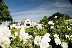 Excelsior Manor Guesthouse offers luxury accommodation in the heart of the Robertson Wine Valley on a working wine farm. Luxury Accommodation, Wooden Flooring, Vines, Clouds, Mansions, House Styles, Outdoor, Beautiful, Item Number