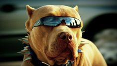 Dog Behavior Modification Starts with You! By becoming your dog's leader, you can change dog behavior. You can regain control of a bad dog quickly. Pitbull Wallpaper, Cute Dog Wallpaper, Animal Wallpaper, Wallpaper Pictures, Funny Dog Pictures, Animal Pictures, Cute Pictures, Cute Puppies, Cute Dogs