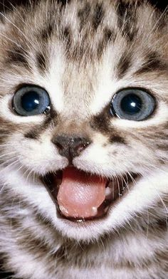 So many cute kittens videos compilation 2019 Cute Kittens, Kittens And Puppies, Cats And Kittens, Cats Meowing, Pretty Cats, Beautiful Cats, Animals Beautiful, I Love Cats, Crazy Cats