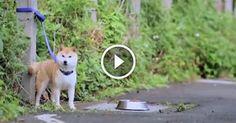 Teneri cuccioli Notizie: Abbandona Il Suo Cane In Strada. Guardate La Commo...