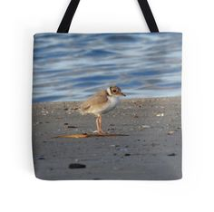 Hooded Plover chick by BirdBags Small
